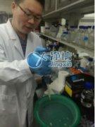 全自动组织研磨机研磨破碎酵母细胞猪扁脑体实验-上海净信