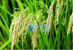 全自动样品快速研磨仪研磨水稻叶片主干实验———上海净信