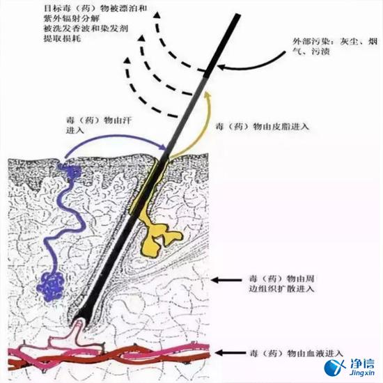 毛发毒品检测仪检测腿毛竟可以测出吸毒?做了全身脱毛也可以?