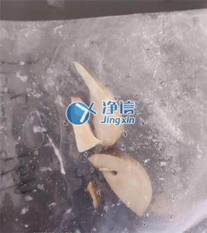shuang孢蘑gu研磨前