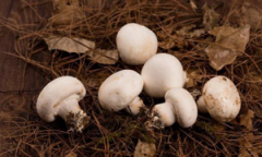 大发体yu在线冷dong大发体yu在线网zhi在shuang孢蘑菇质量检测上de