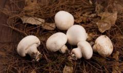 bbin冷冻bbin网址zaishuang孢蘑菇质量检测上de